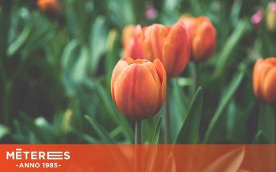 Tavaszi megújulás a Méteresben